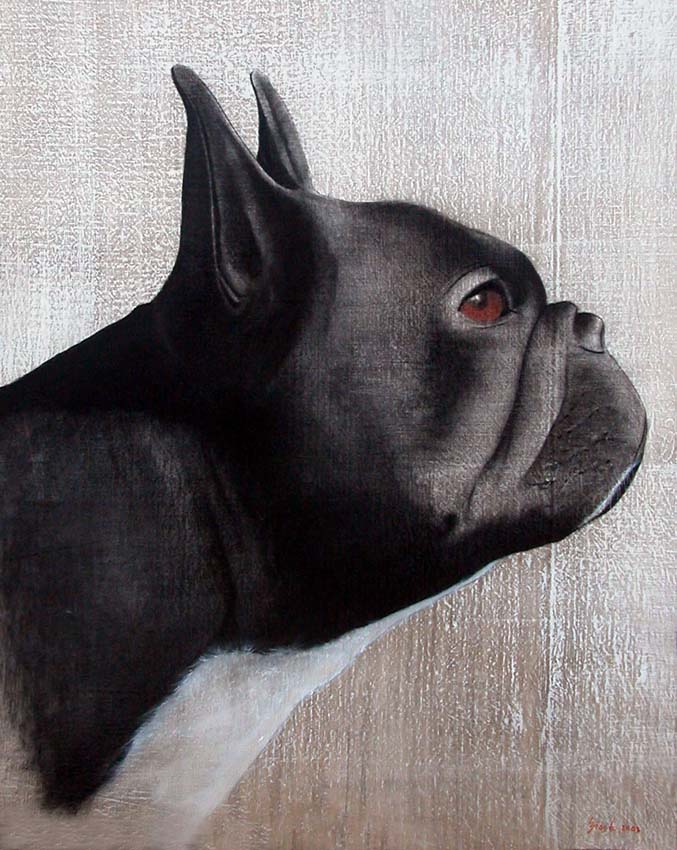 bouledogue french bulldog dog frenchie pet thierry bisch animal painter threatened species. Black Bedroom Furniture Sets. Home Design Ideas