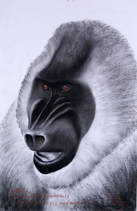 DRILL Monkey-mandrill-ape Animal painting by Thierry Bisch pets wildlife artist painter canvas art decoration