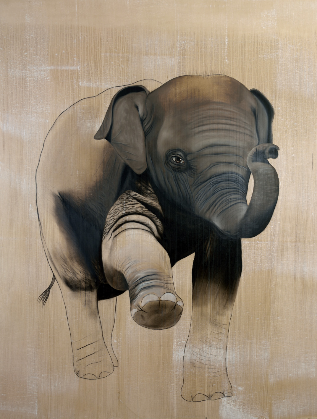ELEPHAS-MAXIMUS elephant-asiatic-indian-baby-elephas-maximus-delete-threatened-endangered-extinction