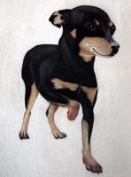 Chien Pinscher dog-pinscher-miniature-pinscher-pet Thierry Bisch painter animals painting art decoration hotel design interior luxury nature biodiversity conservation