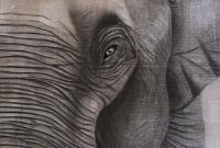 ELEPHANT-16 elephant- Thierry Bisch Contemporary painter animals painting art  nature biodiversity conservation