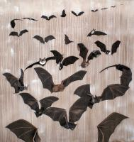 BATS Bats-flight-of-bats Thierry Bisch painter animals painting art decoration hotel design interior luxury nature biodiversity conservation