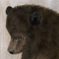 BEAR CUB bear-cub Thierry Bisch painter animals painting art decoration hotel design interior luxury nature biodiversity conservation