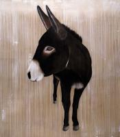 Kali donkey Thierry Bisch Contemporary painter animals painting art  nature biodiversity conservation