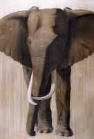 Timba elephant Animal painting by Thierry Bisch pets wildlife artist painter canvas art decoration