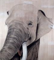 BATUNA elephant Thierry Bisch Contemporary painter animals painting art  nature biodiversity conservation