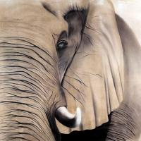 Elephant 2   Animal painting, wildlife painter.Dogs, bears, elephants, bulls on canvas for art and decoration by Thierry Bisch