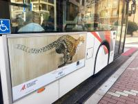 BUS-MONACO-1 cheetah-acynonyx-jubatus-delete-threatened-endangered-extinction Thierry Bisch painter animals painting art decoration hotel design interior luxury nature biodiversity conservation