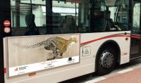 BUS-MONACO-2 cheetah-acynonyx-jubatus-delete-threatened-endangered-extinction Thierry Bisch painter animals painting art decoration hotel design interior luxury nature biodiversity conservation
