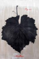 fig.10-Malbec Flower-leaf- Thierry Bisch Contemporary painter animals painting art  nature biodiversity conservation