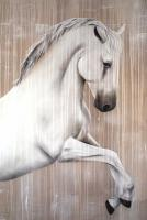 Lipizzan thoroughbred-horse-lipizzaner Thierry Bisch Contemporary painter animals painting art  nature biodiversity conservation