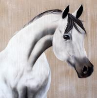 SAYAD horse-arabian Thierry Bisch Contemporary painter animals painting art  nature biodiversity conservation