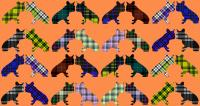 Tartans Frenchies 2   Animal painting, wildlife painter.Dogs, bears, elephants, bulls on canvas for art and decoration by Thierry Bisch