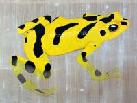 ATELOPUS ZETEKI panamanian-golden-frog-threatened-endangered-extinction-atelopus Thierry Bisch painter animals painting art decoration hotel design interior luxury nature biodiversity conservation