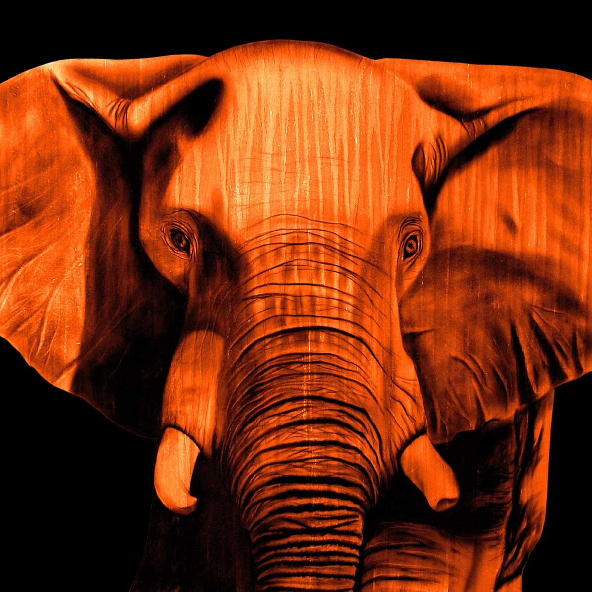 ELEPHANT-ORANGE.jpg